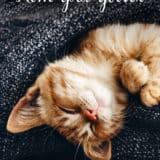«Кот для двоих» Ирина Щеглова